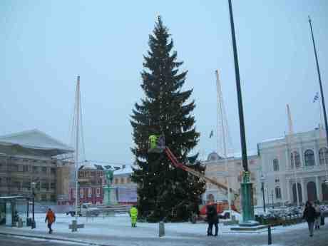 Gustaf Adolfs julgran färdigkläs. Måndag 3 december 2012 kl 15.10.