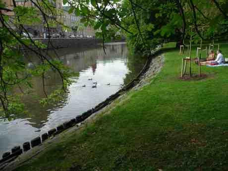Andmamman har lyckats klara alla sina sex ungar undan glupska trutnäbbar. Trädgårdsföreningen lördag 15 juni 2013 kl 17:30.