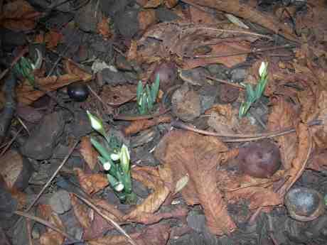 Envetna blommor – komma upp i februari! Trädgårdsföreningen vid Direktörsvillan onsdag 27 februari 2013 kl 16.43.