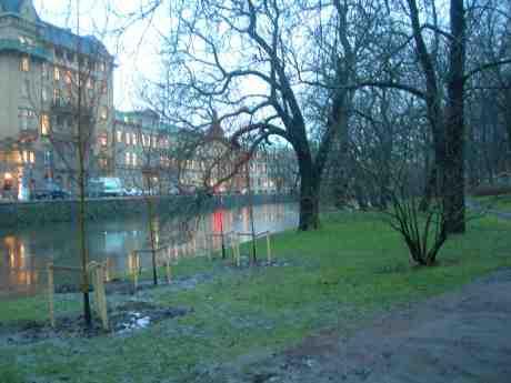 Nya träben i Trädgårdsföreningen. Vallgraven vid Stora Nygatan onsdag 9 januari 2013 kl 15.41.
