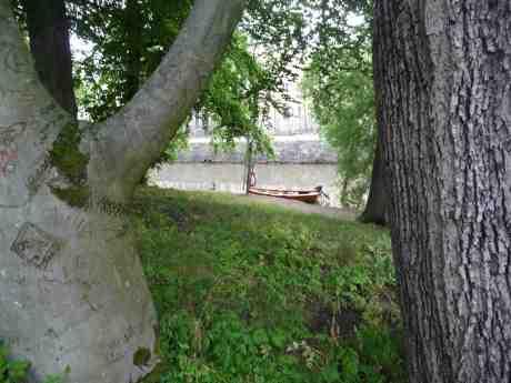 Romantisk eka har lagt till i Vallgraven nedanför ristade Kärleksträdet i Trädgårdsföreningen. Lördag 27 juli 2013 kl 19:52.