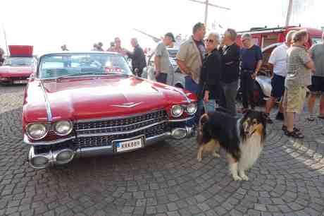 Skönheter på Lilla Bommens Torg: Collie – inte till salu –  och Cadillac Coupe 1959. Onsdag 6 augusti 2014 kl 18:44.