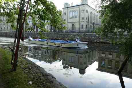 Ung mås vid sin döda kompis när Paddan 8 passerar. Trädgårdsföreningen söndag 6 juli 2014 kl 20:03.