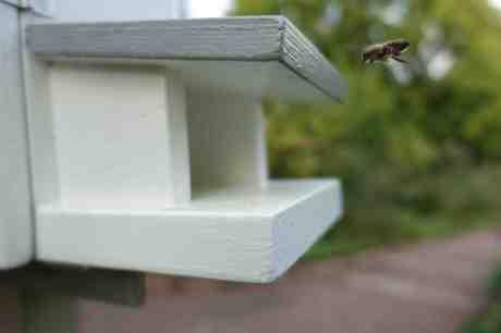 Flitiga biet under inflygning till Vita Kupans landningsbana i Trädgårdsföreningen fredag 5 september 2014 kl 18:26.