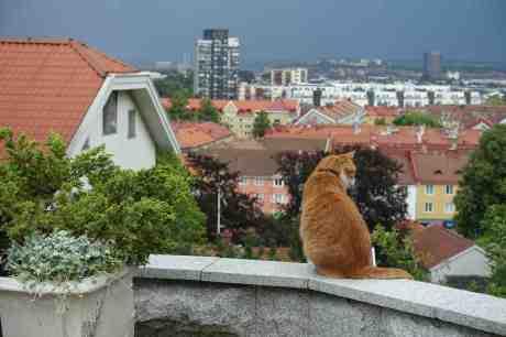 Katten Jansson på Ramberget ser ut över sin stad och dess tiotusentals råttor. Lördag 26 juli 2014 kl 16:37.